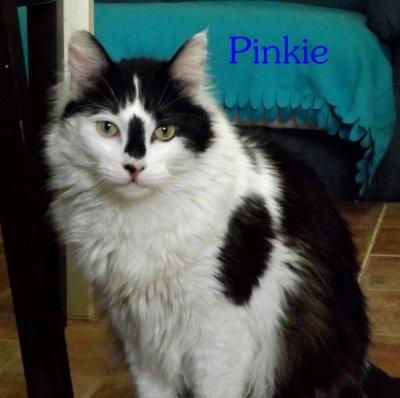 PINKIE_512ccfe010297