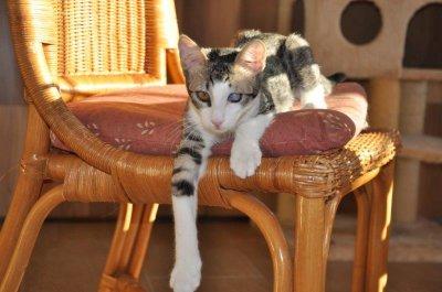 D-Kitten_Daya4