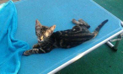 D-Kitten_Diego1
